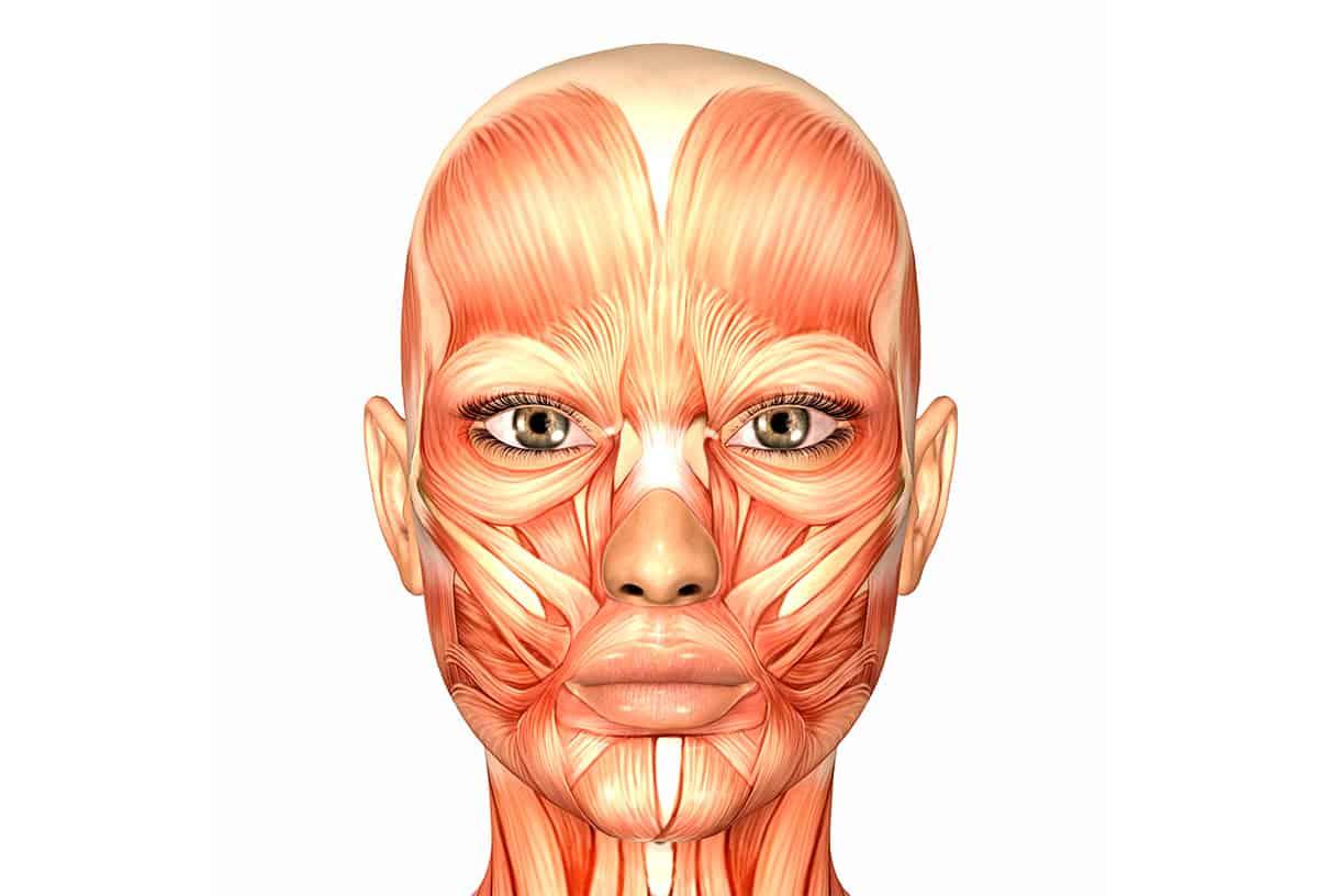 Abbildung der Gesichtsmuskulatur unter der Haut